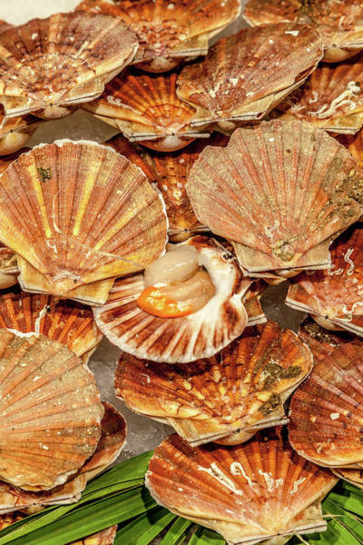 Wall Art - Photograph - Coquilles Saint-jacques by W Chris Fooshee