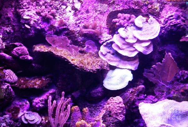 Digital Art - Coral Art 5 by Francesca Mackenney