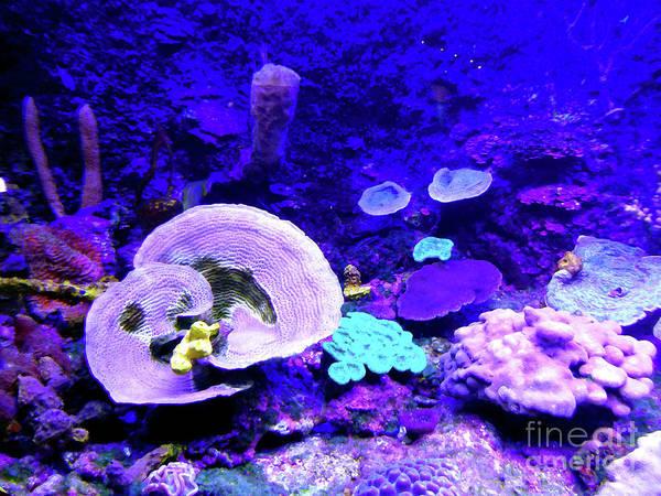 Digital Art - Coral Art by Francesca Mackenney