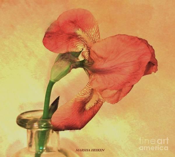 Wall Art - Photograph - Coral Iris by Marsha Heiken