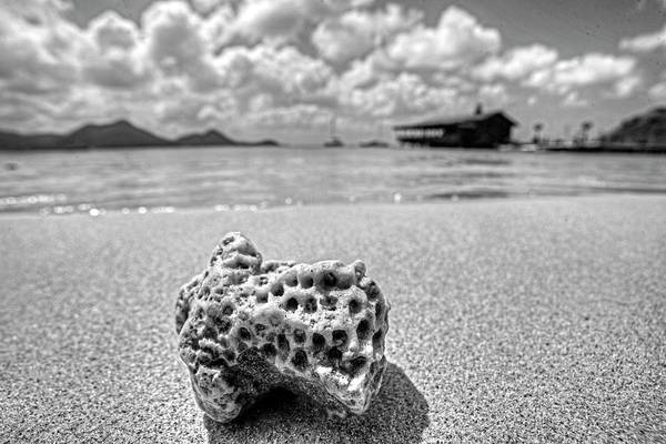 Photograph - Coral On Gros Islet Beach Saint Lucia Caribbean Black And White by Toby McGuire