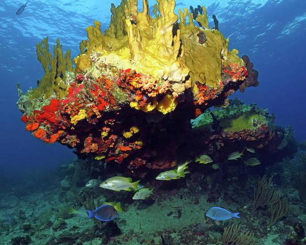 Photograph - Coral Reef Scene, Calf Rock, Virgin Islands by Pauline Walsh Jacobson