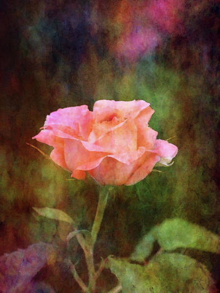 Photograph - Coral Rose 0730 Idp_2 by Steven Ward