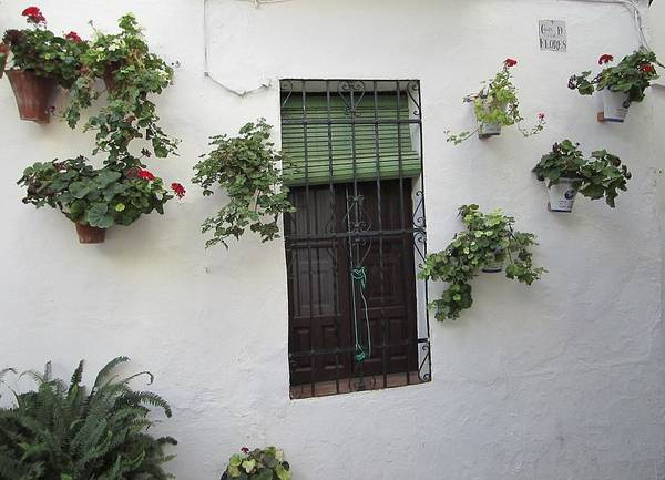 Photograph - Cordoba Old Street Plants Surrounding The Wrought Iron Window Spain by John Shiron