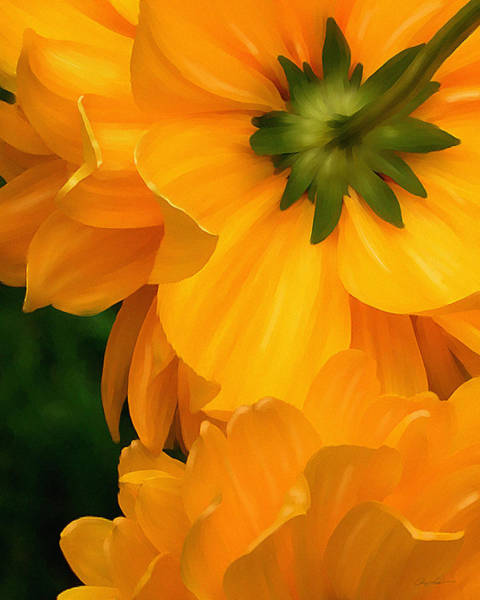 Digital Art - Coreopsis by Ann Lauwers
