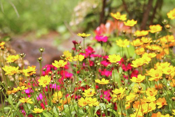 Photograph - Coreopsis Garden by Trina Ansel