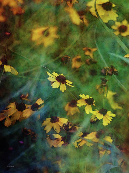 Photograph - Coreopsis In The Grass 3859 Idp_2 by Steven Ward