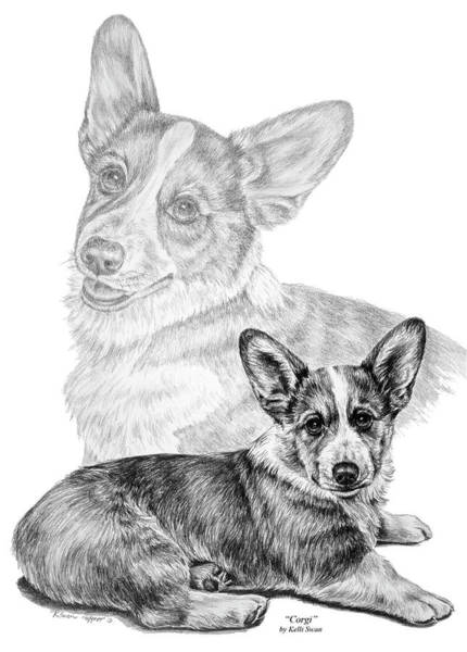 Drawing - Corgi Dog Art Print by Kelli Swan