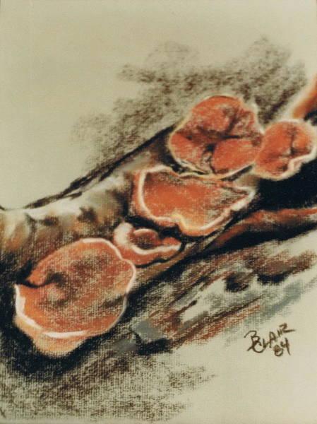 Pastel - Coriolopsis by Barbara Keith