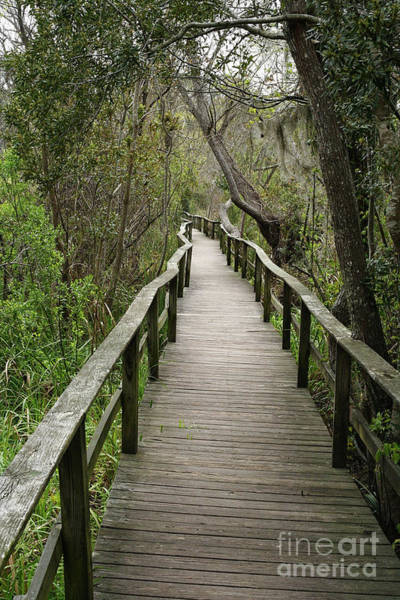 Photograph - Corkscrew Boardwalk by Thomas Marchessault