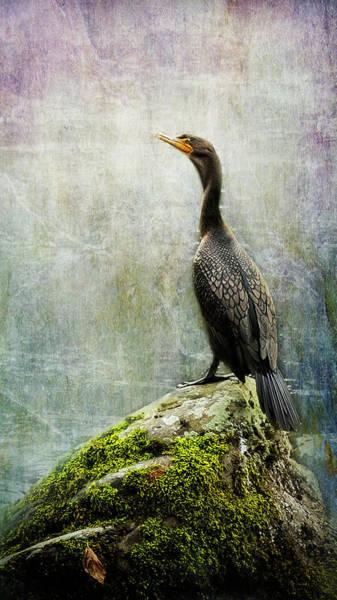 Photograph - Cormorant by Belinda Greb