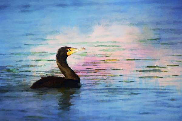 Photograph - Cormorant Colors by Alice Gipson