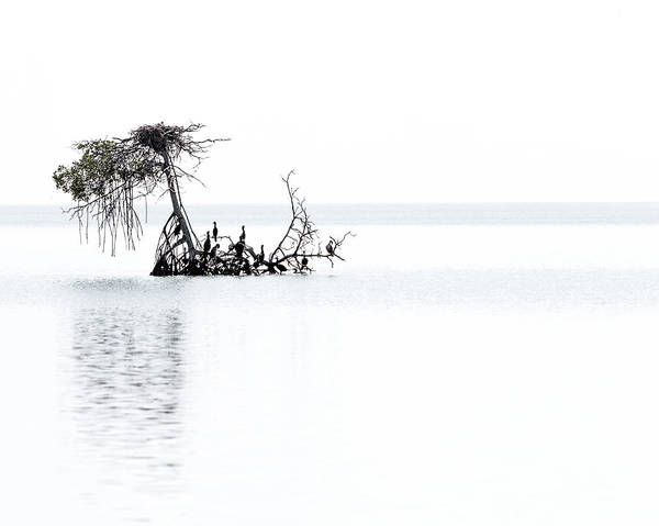 Photograph - Cormorant Island by Patti Deters