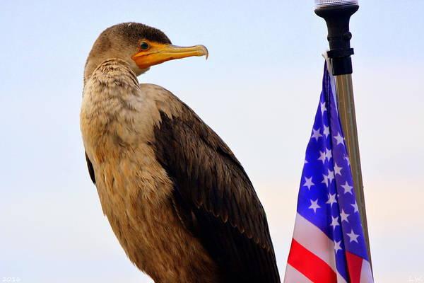 Photograph - Cormorant Profile 2 by Lisa Wooten