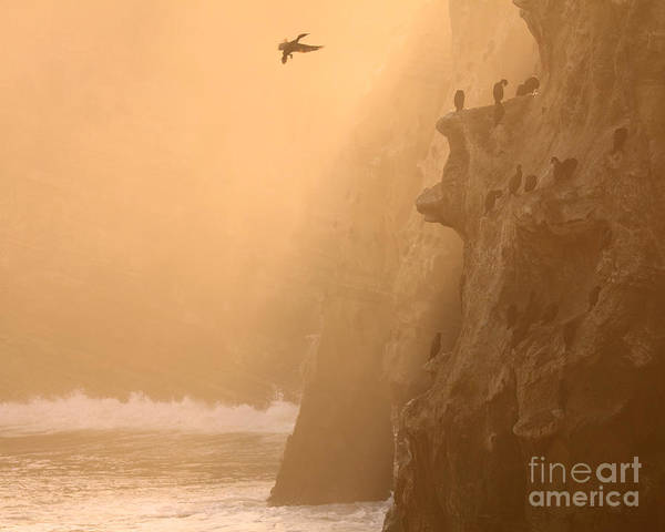 Phalacrocorax Auritus Wall Art - Photograph - Cormorant Rookery In Dawn Fog by Max Allen