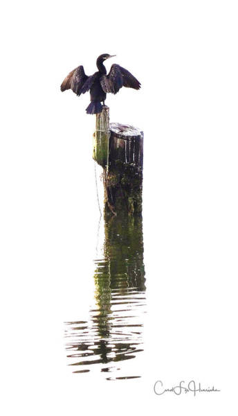 Wall Art - Digital Art - Cormorant Sunning by Carol Fox Henrichs