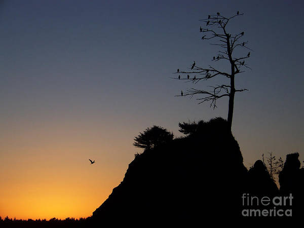 Photograph - Cormorant Tree by Julie Rauscher