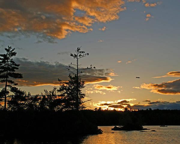 Photograph - Cormorant Tree by Lynda Lehmann
