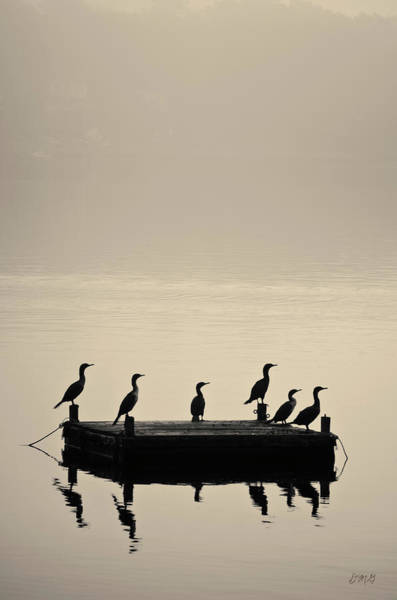 Cormorants And Dock Taunton River No. 2 Art Print