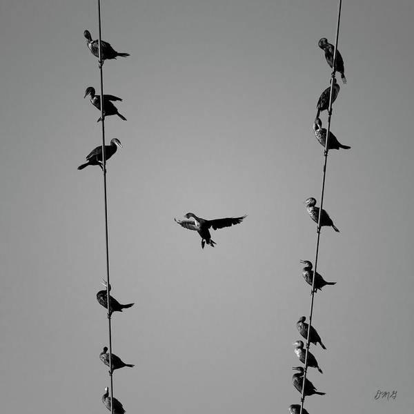 Photograph - Cormorants At Twilight Bw by David Gordon