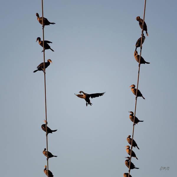 Photograph - Cormorants At Twilight by David Gordon