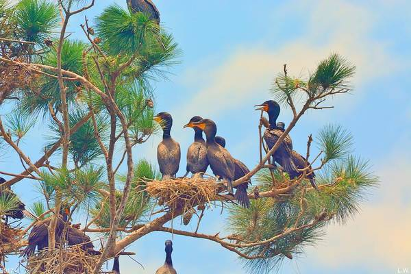 Photograph - Cormorants Hanging Out by Lisa Wooten