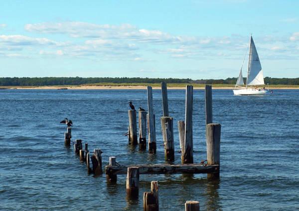 Photograph - Cormorants In Newburyport Harbor by Mary Capriole