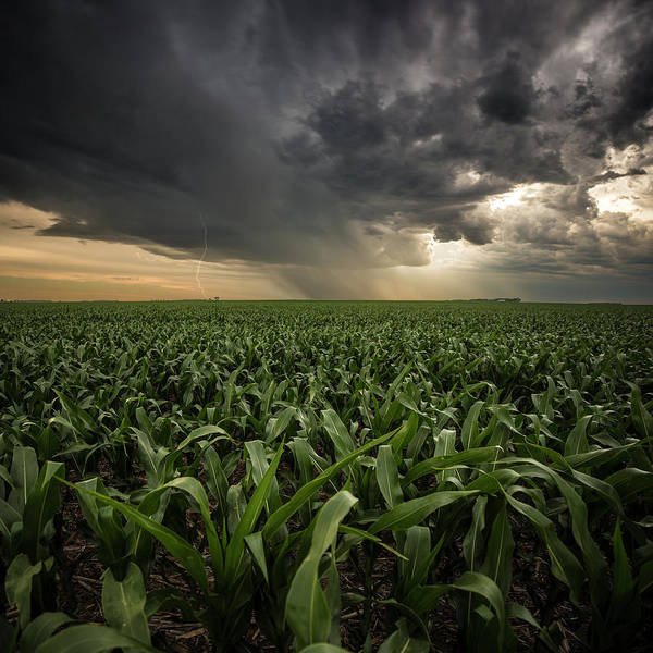 Wall Art - Photograph - Corn And Lightning by Aaron J Groen