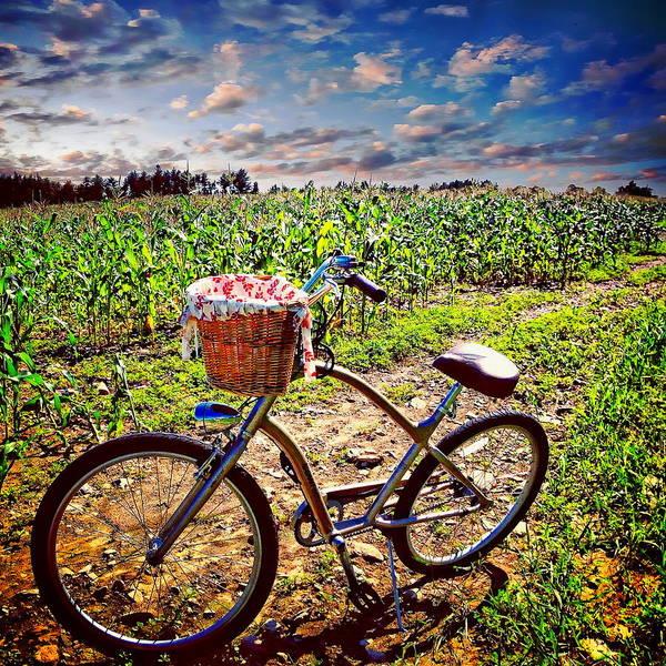 Photograph - Corn Field by Anthony Dezenzio