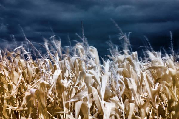 Photograph - Corn Field by Helga Novelli