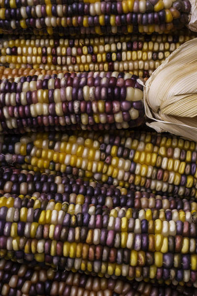 Indian Corn Photograph - Corn Kernals by Garry Gay
