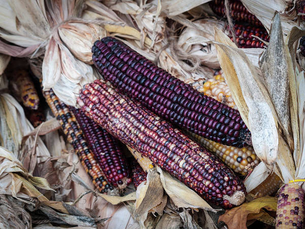 Photograph - Corn by Stewart Helberg