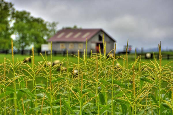 Photograph - Corn Tops by Sam Davis Johnson