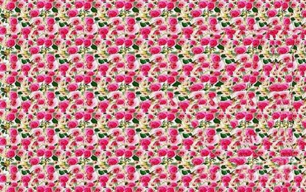 Butterfly On Flower Digital Art - Corner Wall Butterfly Stereogram by JMarP