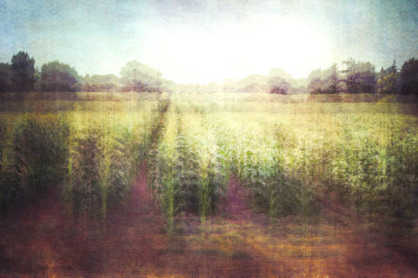 Wall Art - Photograph - Cornfields by Violet Gray