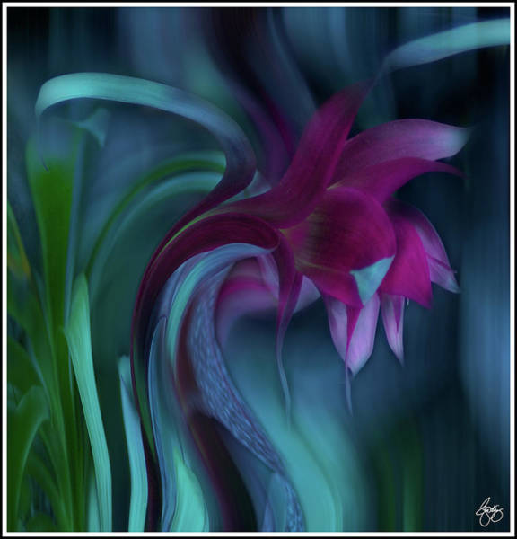 Photograph - Cornflower Dreams 2 by Wayne King