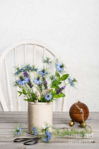 Dispenser Photograph - Cornflowers by Amanda Elwell