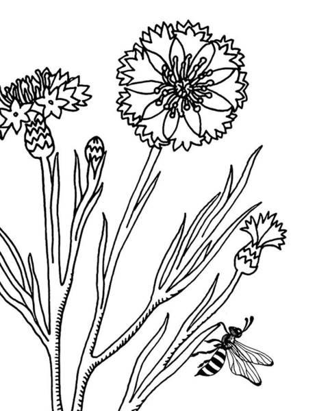 Drawing - Cornflowers And Bee Drawing  by Irina Sztukowski