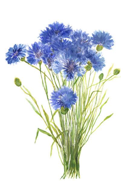 Blue Cornflower Painting - Cornflowers by Green Palace