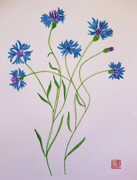 Painting - Cornflowers by Margaret Welsh Willowsilk