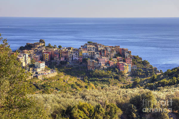 Photograph - Corniglia by Spencer Baugh