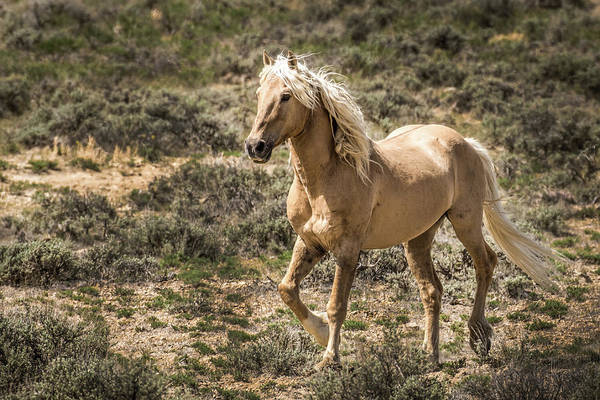 Wall Art - Photograph - Corona Mustang Stallion by Dawn Key
