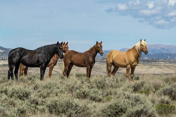 Photograph - Corona's Mustang Band by Dawn Key