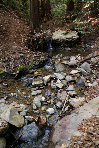 Photograph - Corte Madera Creek On Mt Tamalpais #7 by Ben Upham III