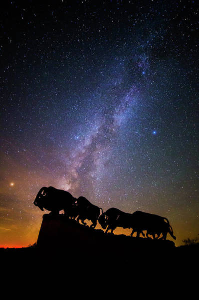 Wall Art - Photograph - Cosmic Caprock Bison by Stephen Stookey