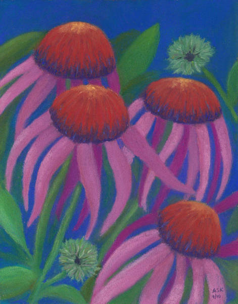 Pastel - Cosmic Coneflowers by Anne Katzeff