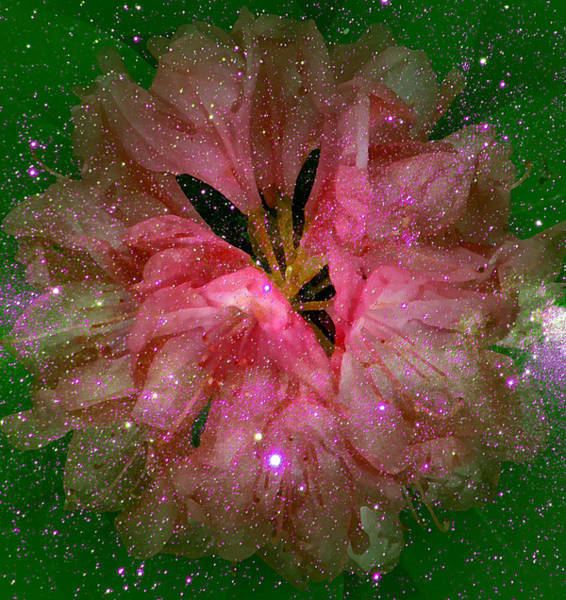 Digital Art - Cosmic Rhododendron by Robert Kernodle
