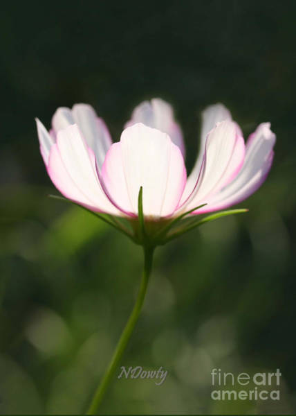 Photograph - Cosmo Delicate Balance by Natalie Dowty