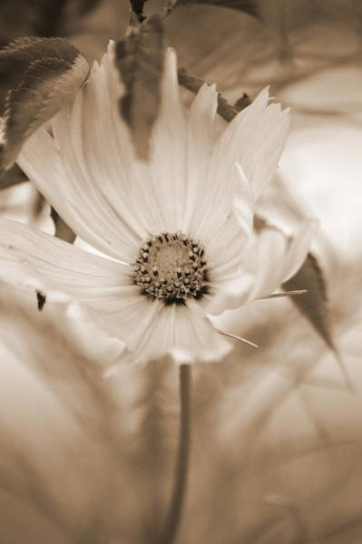 Photograph - Cosmo by Donna Bentley