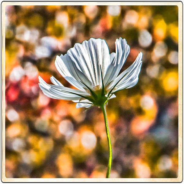 Wall Art - Photograph - Cosmo I by Ron Plasencia